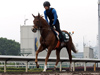 Neorealism on the all-weather track at Sha Tin