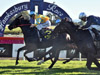 Shazee Lee wins the Hawkesbury Guineas