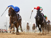 Thunder Snow winning the UAE Derby Sponsored By The Saeed & Mohammed Al Naboodah Group