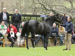 Stallion manager Damien Kirwan parading Pentire