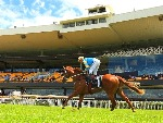 Performer deserves his spot at the top of Slipper betting