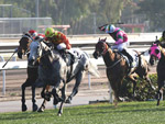 Pingwu Spark (grey horse) makes it three in a row as he takes the Class 2 Lung Kong Handicap.