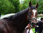 Accidental Agent posing after, winning the Queen Anne Stakes (Group 1) (British Champions Series) (Str)