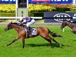 Almandin ready for Sydney Cup