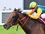 BALL OF MUSCLE winning the Keno Schillaci Stakes during Melbourne Racing at Caulfield in Melbourne, Australia.