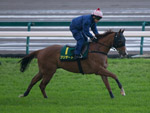 Blizzard exercises on the turf track at Chukyo Racecourse this morning.