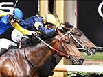 BRUTAL winning the Antler Luggage Plate during Melbourne racing at Flemington in Melbourne, Australia.