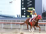 US-bred Clean Up Joy (Purge) won the Grand Prix Stakes in 2016.