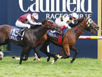 Fastnet Tempest winning well over the Caulfield 1400m.