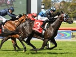 Ringerdingding winning the Sandown Guineas