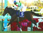 SATURNALIA winning the Hopeful Stakes at Nakayama in Japan.