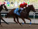 Skywalk winning the KOREA RACING AUTHORITY TROPHY OPEN