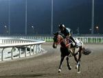 Racing Development Board (RDB) horses at trackwork at the Conghua Training Centre.