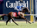 Avilius winning the Carlton Draught Peter Young