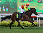 Gold Star winning the RESTRICTED MAIDEN