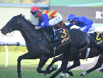 PIERATA winning the Schweppes All Aged Stakes.
