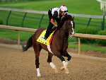 WAR OF WILL runs on the track during morning training for the Kentucky Derby at Churchill Downs in Louisville, Kentucky.