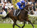 Winx trialing on 16 March 2019