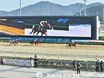 Racecourse : Busan