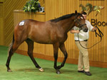 The $800,000 Redoute's Choice colt