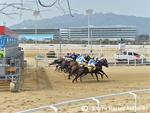 Racecourse : Seoul (Korea)