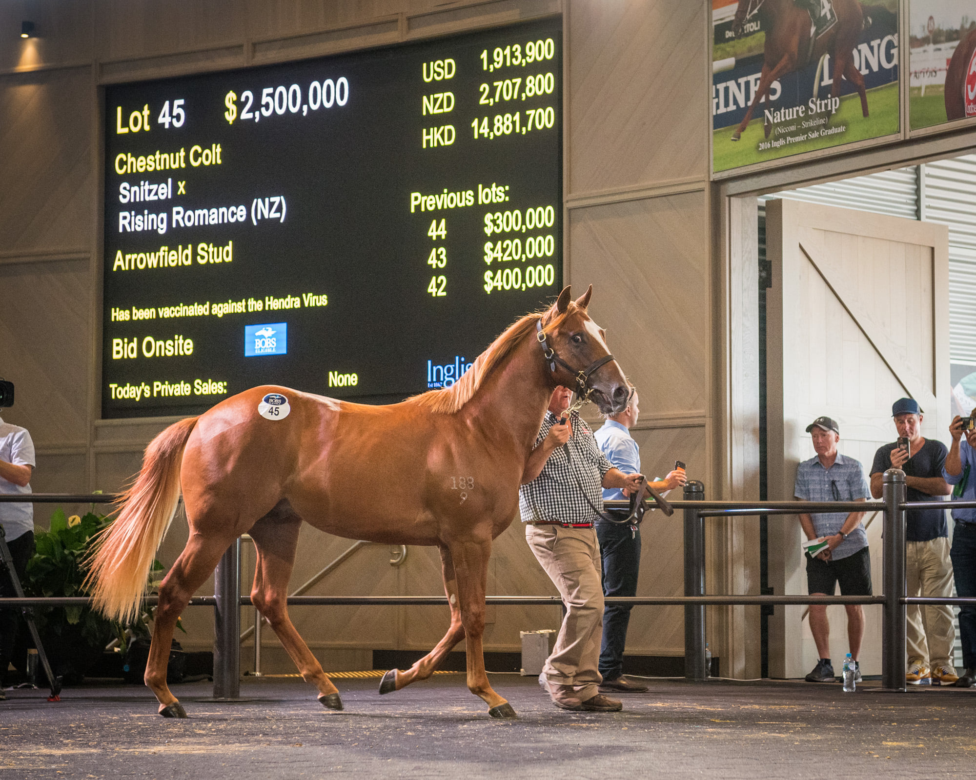 The 2021 Inglis Australian Easter Yearling Sale topping Snitzel colt. Picture: Inglis.