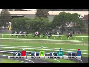 2013 Hobartville Stakes - Pierro